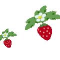 ひらひらイチゴの落し物